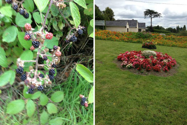 Flowers and Berries in Killaloe